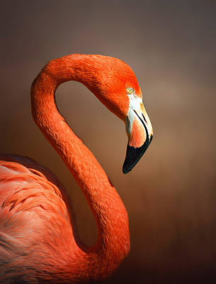 Birds Royalty-Free and Rights-Managed Images - Caribean flamingo portrait by Johan Swanepoel