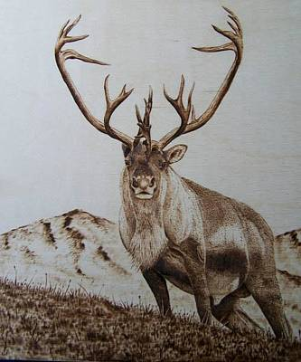 Pyrography - Caribou by Adam Owen