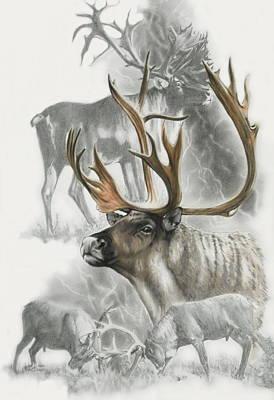 Caribou Original