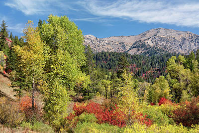 Photograph - Caribou-targhee Autumn by Kathleen Bishop
