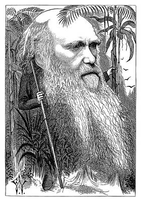 Photograph - Caricature Portrait Of Charles Darwin by Phil Cardamone