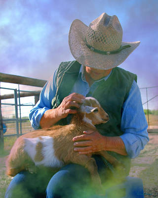 Photograph - Caring For Goats by Barbara D Richards