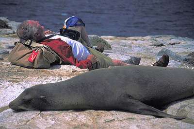Photograph - Carl Purcell Naps With A Seal by Unknown