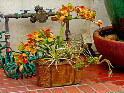 Photograph - Carmel Orchids In A Corner  by Robert Meyers-Lussier
