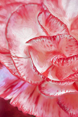 Photograph - Carnation #3 by George Robinson