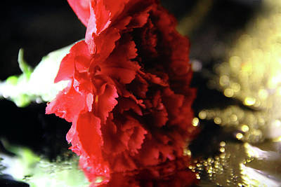 Photograph - Carnation And Gold Sparkles by Angela Murdock