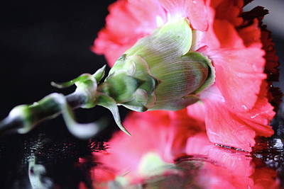 Photograph - Carnation And Reflecations by Angela Murdock