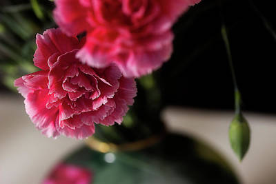 Photograph - Carnation Series 2 by Mike Eingle