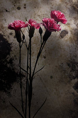 Photograph - Carnation Series 3 by Mike Eingle