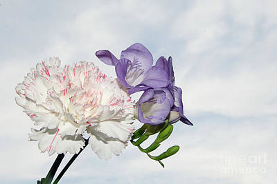 Photograph - Carnation With Freesia by Elvira Ladocki