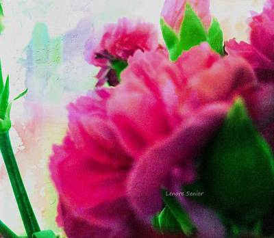 Photograph - Carnations by Lenore Senior