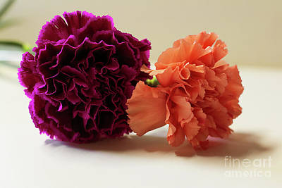 Photograph - Carnations by Mim White