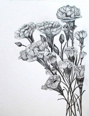 Carnation Drawing - Carnations by Nicole Curreri