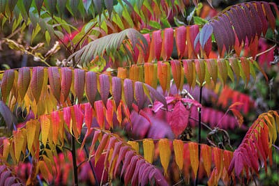 Photograph - Carnival Of Autumn Color by Bill Pevlor