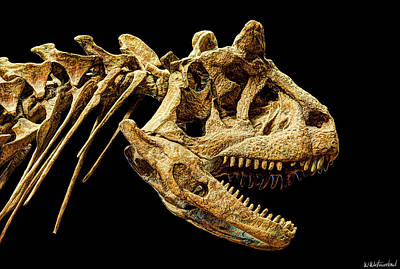 Photograph - Carnotaurus Skull by Weston Westmoreland