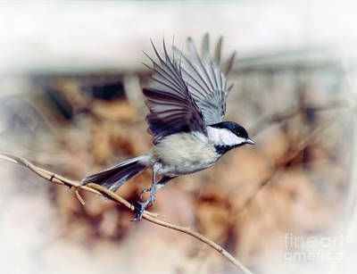 Carolina Chickadee - Come Fly With Me  Art Print