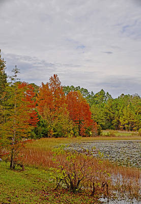 Photograph - Carolina In The Fall by Linda Brown