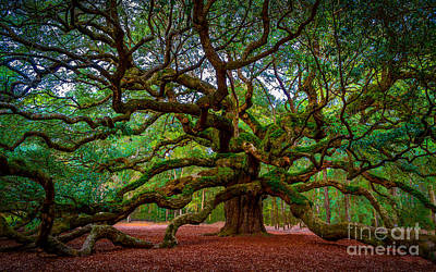 Photograph - Carolina Live Oak Haven by David Smith