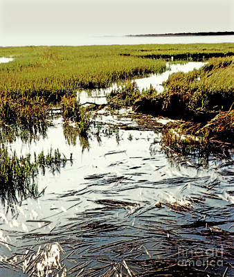Carolina Marsh Art Print by Linda Parker
