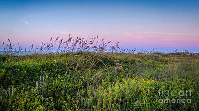 Photograph - Carolina Sea Oats by David Smith