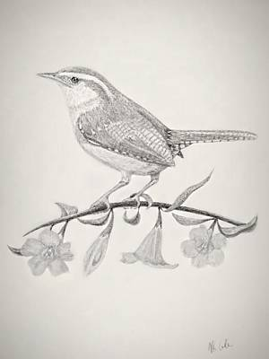 Carolina Wren Drawing - Carolina Spring by Vanessa Cole