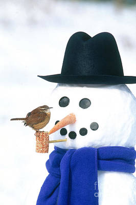 Photograph - Carolina Wren And Snowman by Steve Maslowski