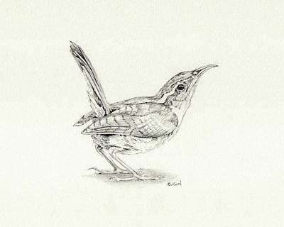 Carolina Wren Drawing - Carolina Wren by Belinda Keal