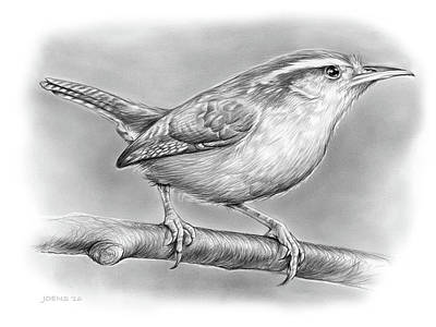 Wren Drawing - Carolina Wren by Greg Joens