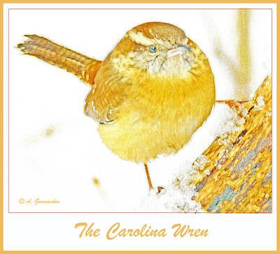 Carolina Wren Digital Art - Carolina Wren In Winter Animal Portrait by A Gurmankin