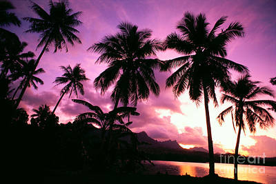 Kosrae Island Photograph - Caroline Islands, Kosrae by Allan Seiden - Printscapes