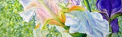 Carols-iris-i Art Print by Nancy Newman