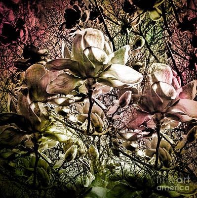Photograph - Carols Magnolia by Karen Lewis