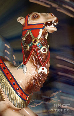Photograph - carousel animal photographs -  Carousel Camel by Sharon Hudson