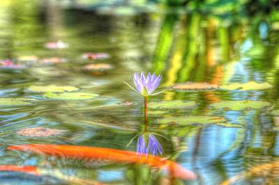 Photograph - Carp And Lily by Richard Omura