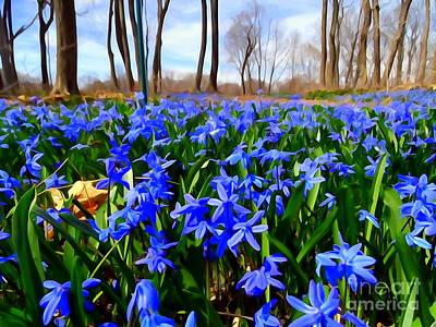 Photograph - Carpet Of Blue by Ed Weidman
