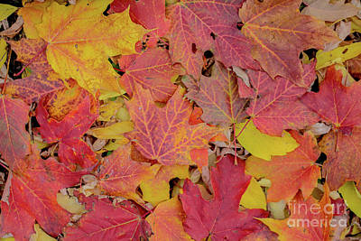 Photograph - Carpet Of Colorful Leaves by Cheryl Baxter