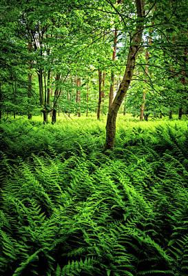 Photograph - Carpet Of Ferns by Carolyn Derstine