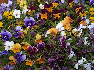 Photograph - Carpet Of Flowers by Michael Canning