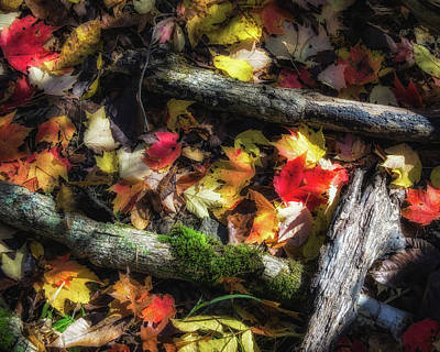 Autumn Scene Photograph - Carpet Of Leaves by James Barber