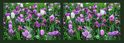 Photograph - Carpet Of Purple Tulips. Diptych by Jenny Rainbow