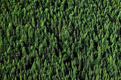 Carpet Of Trees Art Print by Todd Klassy