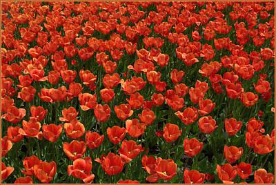 Spring Bulbs Digital Art - Carpet Of Tulips by Mindy Newman
