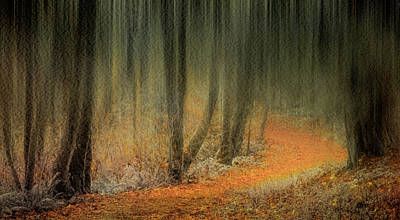 Photograph - Carpeted Forest by Don Schwartz