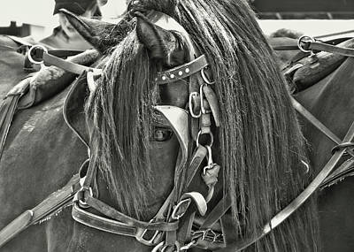 Forelock Photograph - Carriage Horse by JAMART Photography