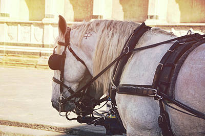 Photograph - Carriage Pair by JAMART Photography