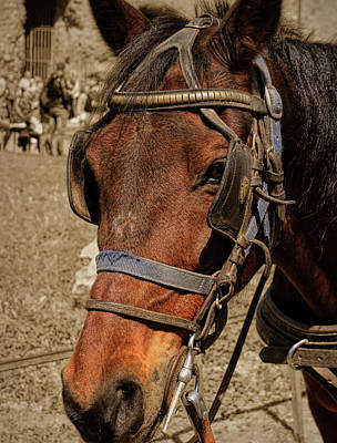 Photograph - Carriage Tour by JAMART Photography