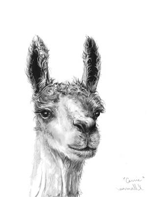 Animals Drawings - Carrie by K Llamas