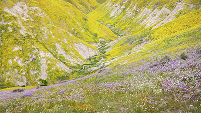 Photograph - Carrizo Plain - Flower Gorge by Alexander Kunz
