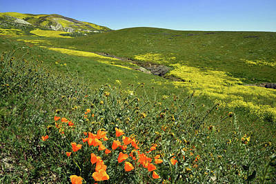 Fiddleneck Photograph - Carrizo Plain Poppies by Kathy Yates