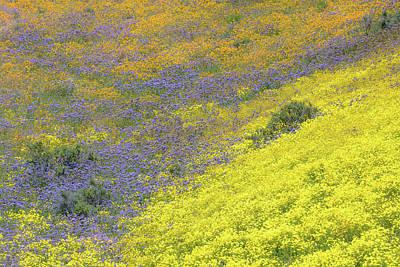 Photograph - Carrizo Plain Tricolor by Alexander Kunz